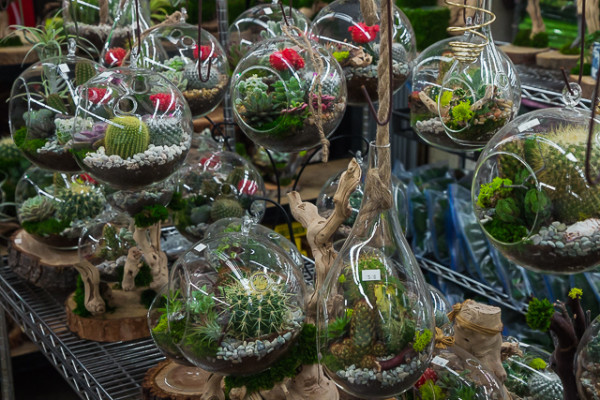 The Los Angeles Flower is the largest floral market in the country and sells everything form tiny cactus to fully-grown palm trees.