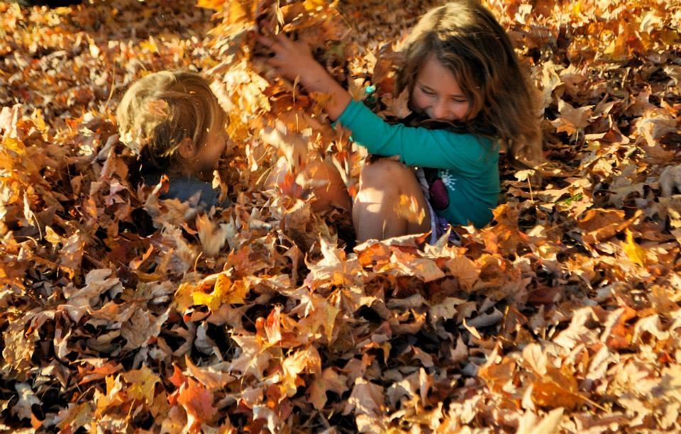 Fall NC