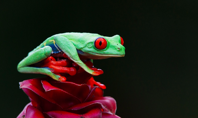 17 most biodiverse places on earth