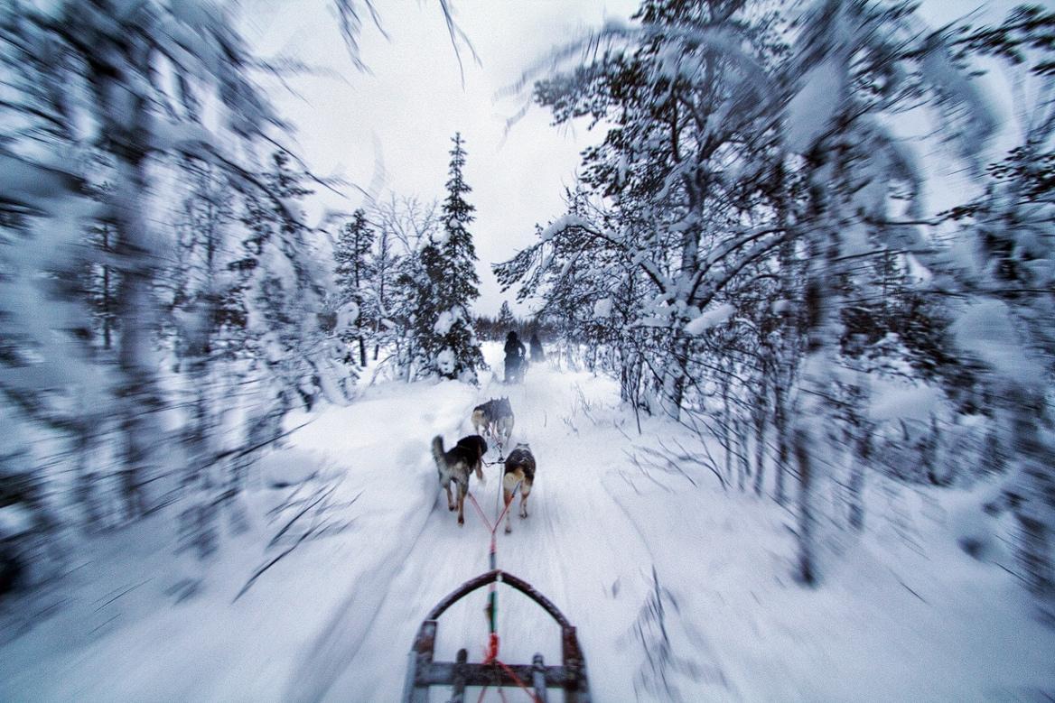 Photo: Polar Night Magic