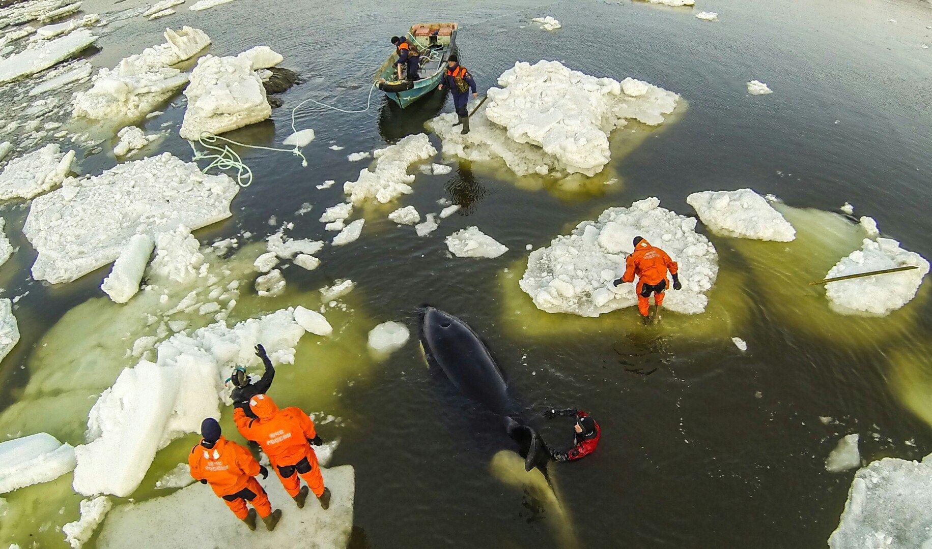 rescue orca