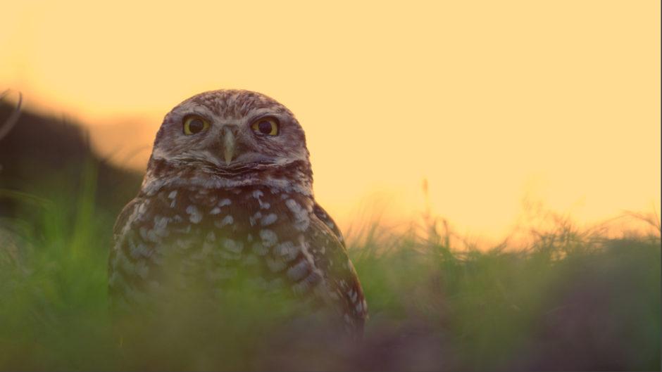owl sw florida