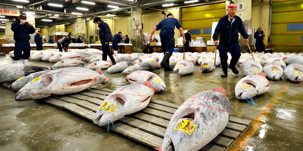 Catching the last days of the Tokyo fish market