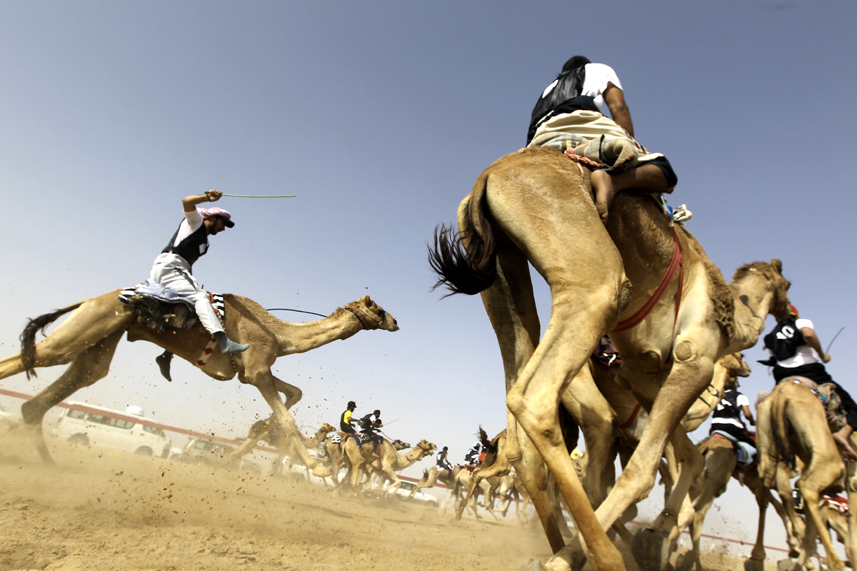 Jockeys compete in traditional camel rac