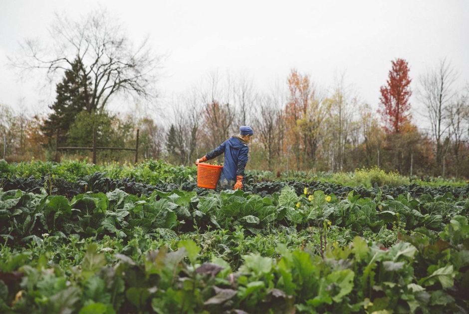 Maine farmer