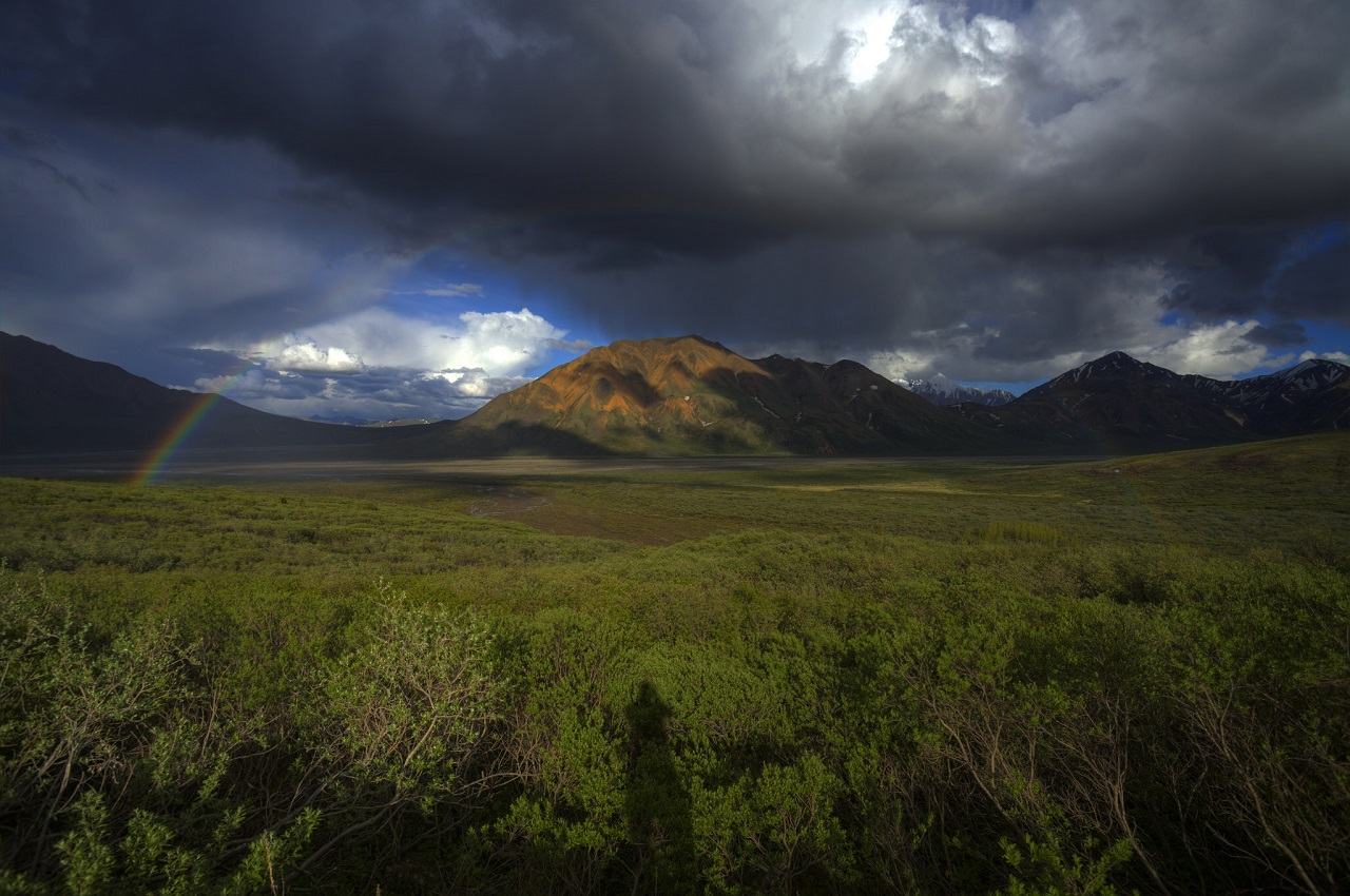 Photo: Denali National Park and Preserve