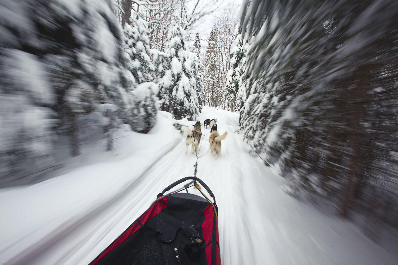dog-sledding_algonquin-provincial-park_credit-ontario-tourism
