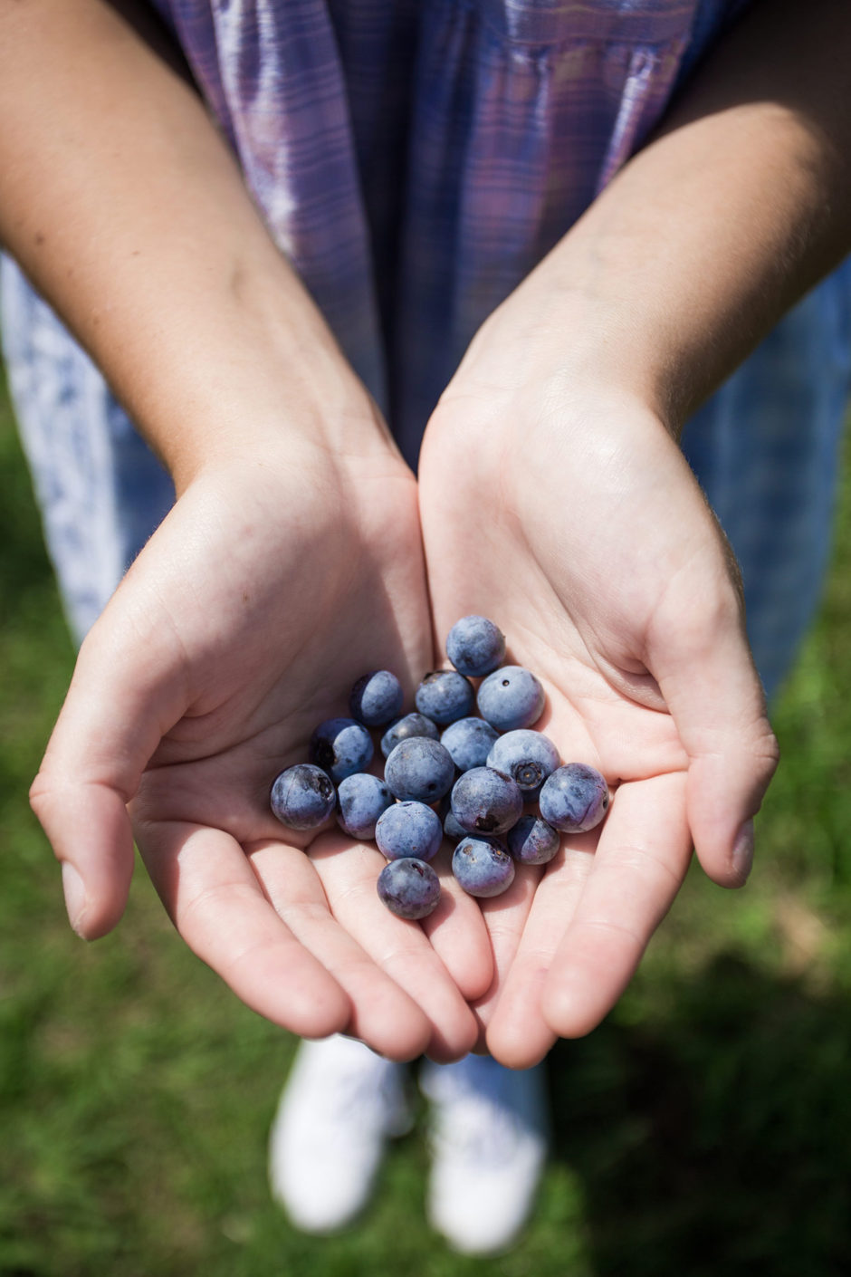 Pungo Virginia Beach blueberries don't reuse