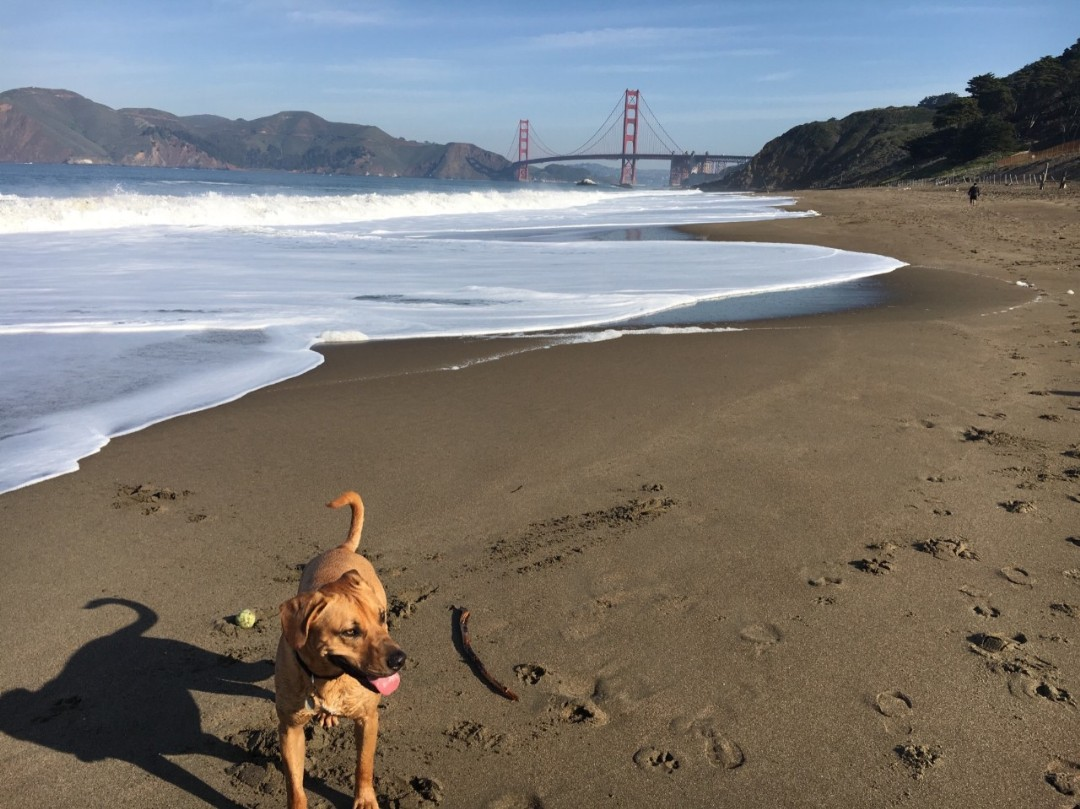 14 places to reach mind-blowing views and nature right from San Francisco