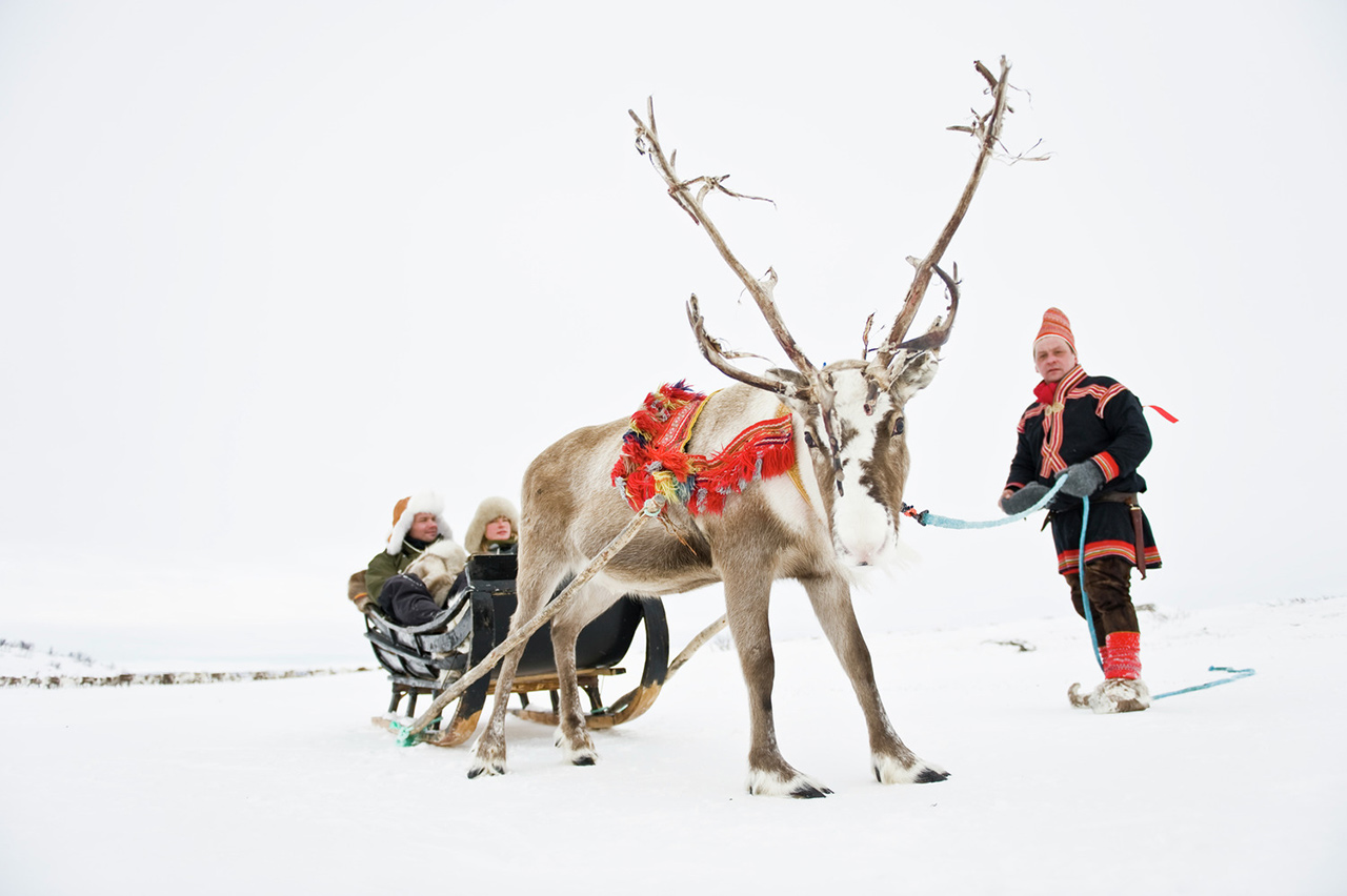 Sami and reindeer Norway