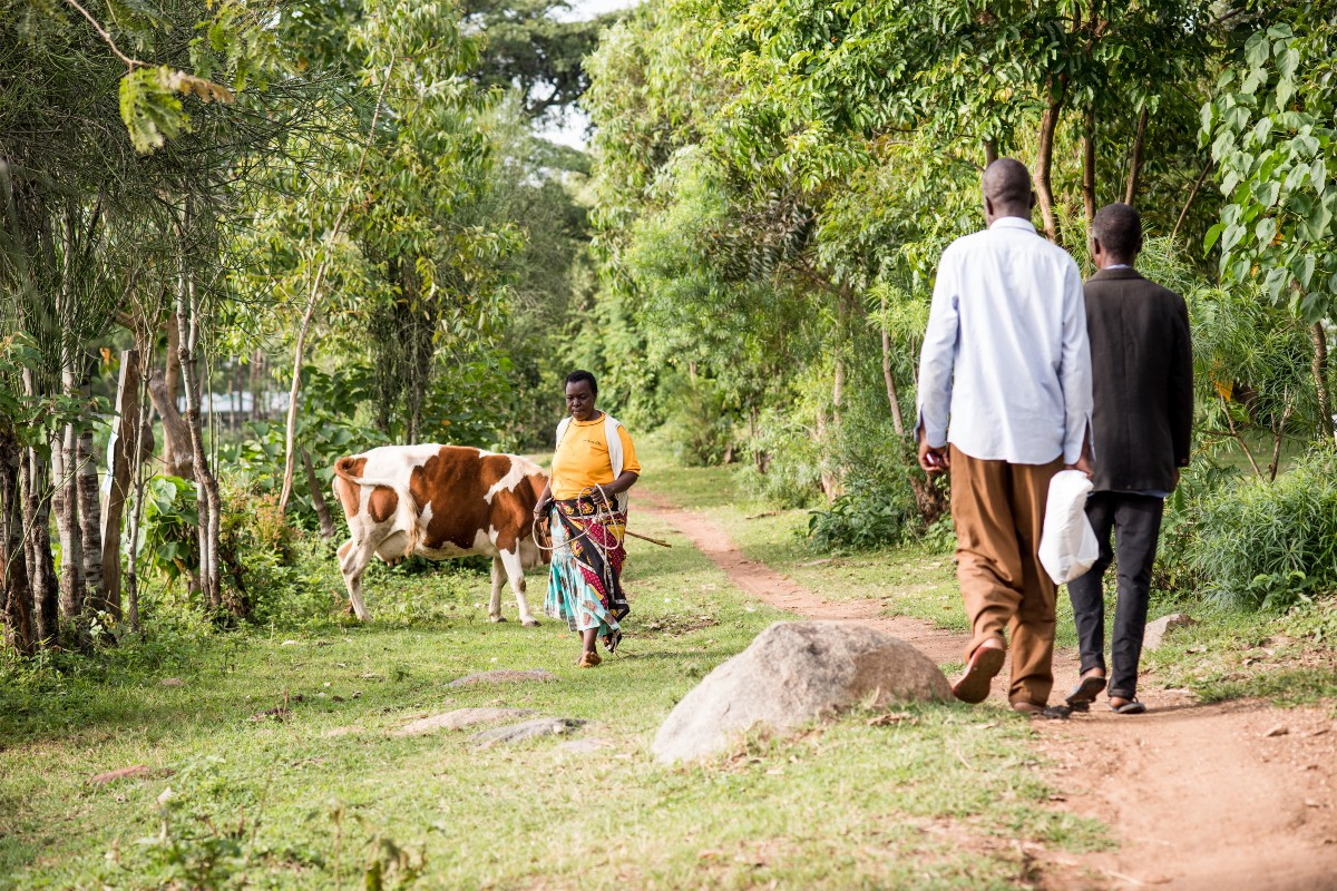 Christine Nakhumicha takes her cow to graze near her home.