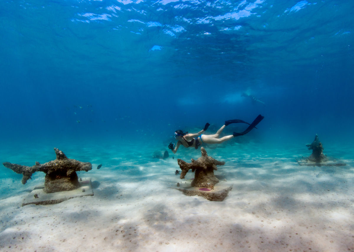 7 adventures you didn't know were possible in The Palm Beaches, Florida
