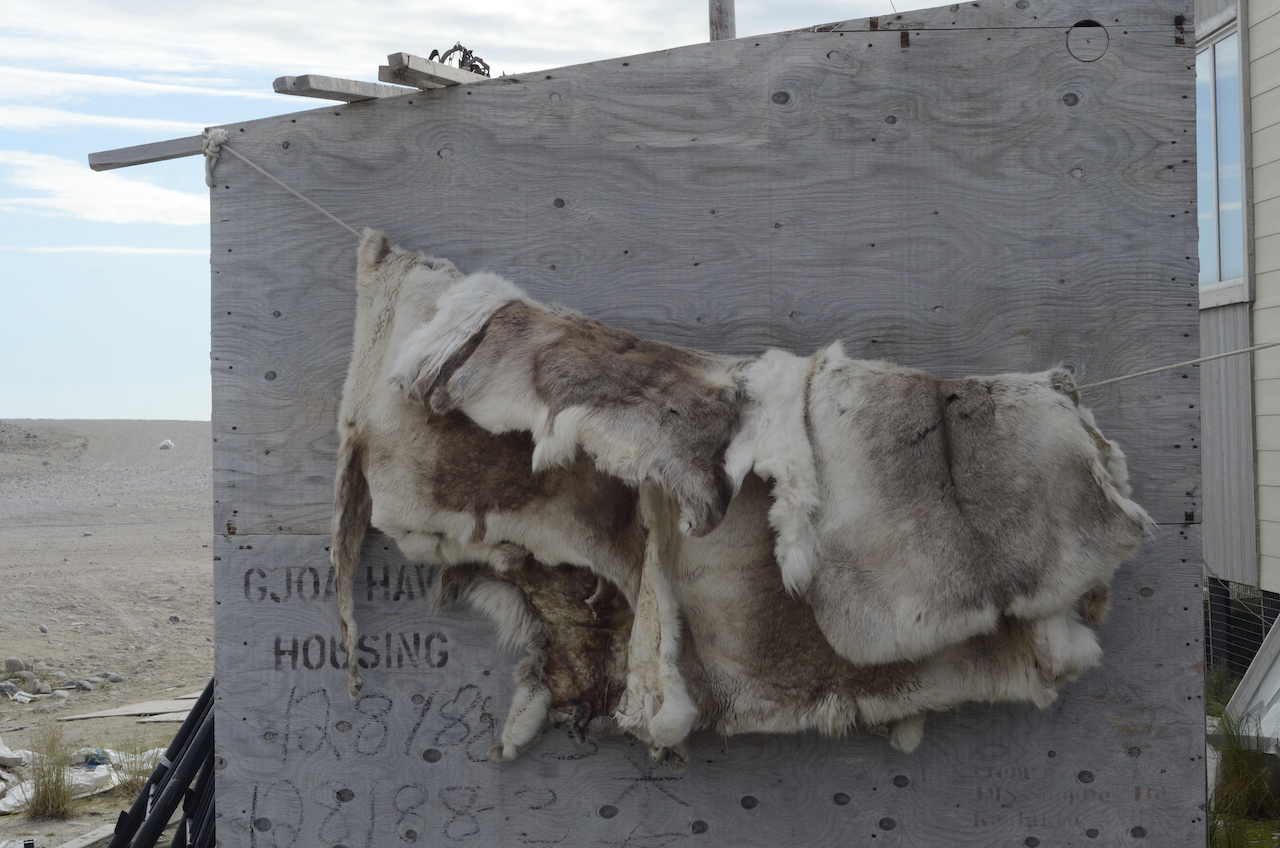 Reindeer pelts, Gjoa Haven