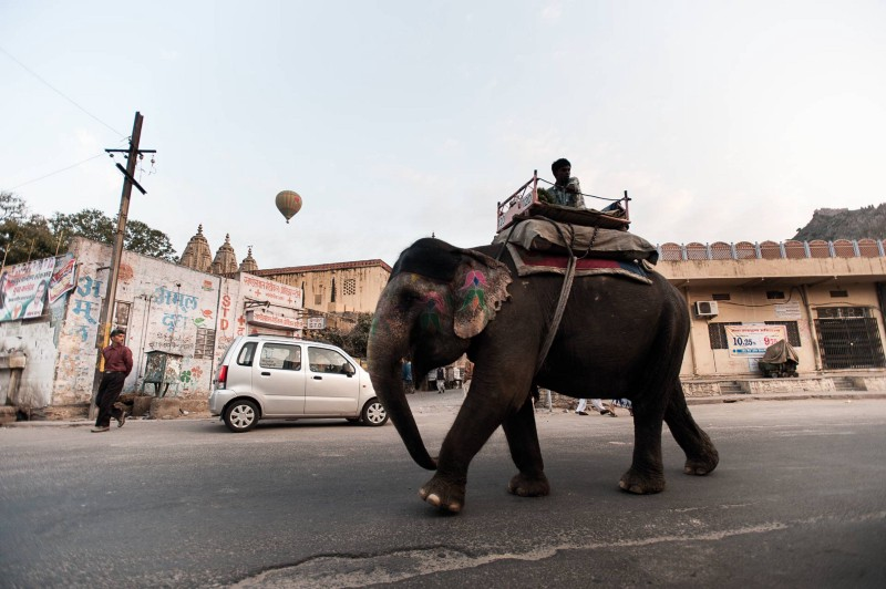 Elephant and balloon. Pushkar, India 2011. ©Jens Lennartsson