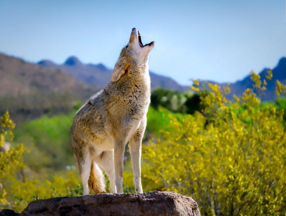 Arizona Sonora Desert Museum don't re use