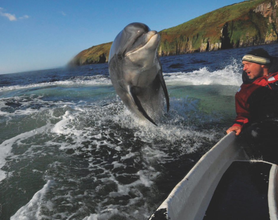Dingle dolphin Ireland