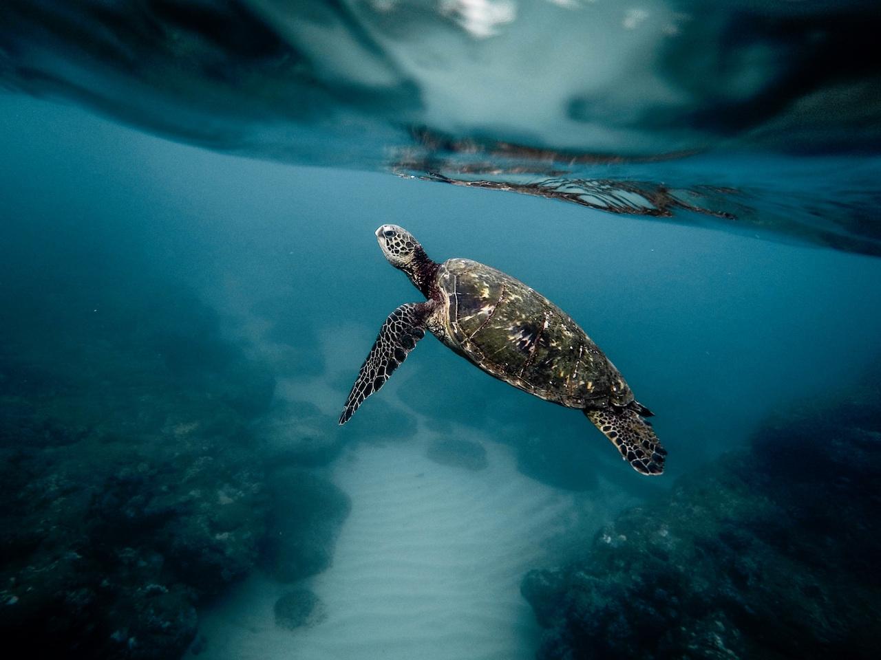 Stoked on snorkeling