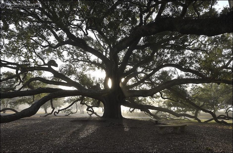 Friendship Oak Mississippi