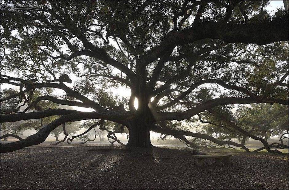 Friendship Oak Mississippi
