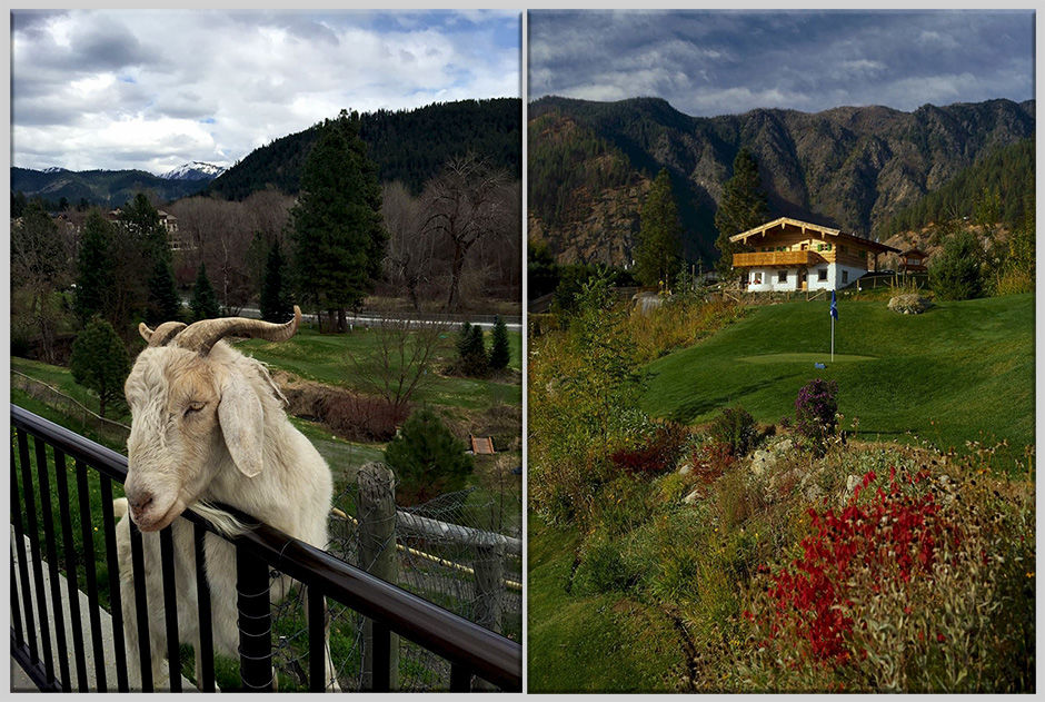 Leavenworth golf and goat