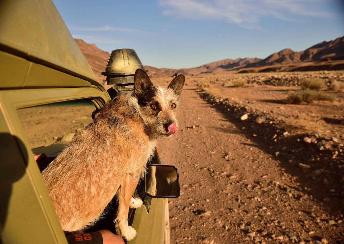 10 national parks you can explore with your dog