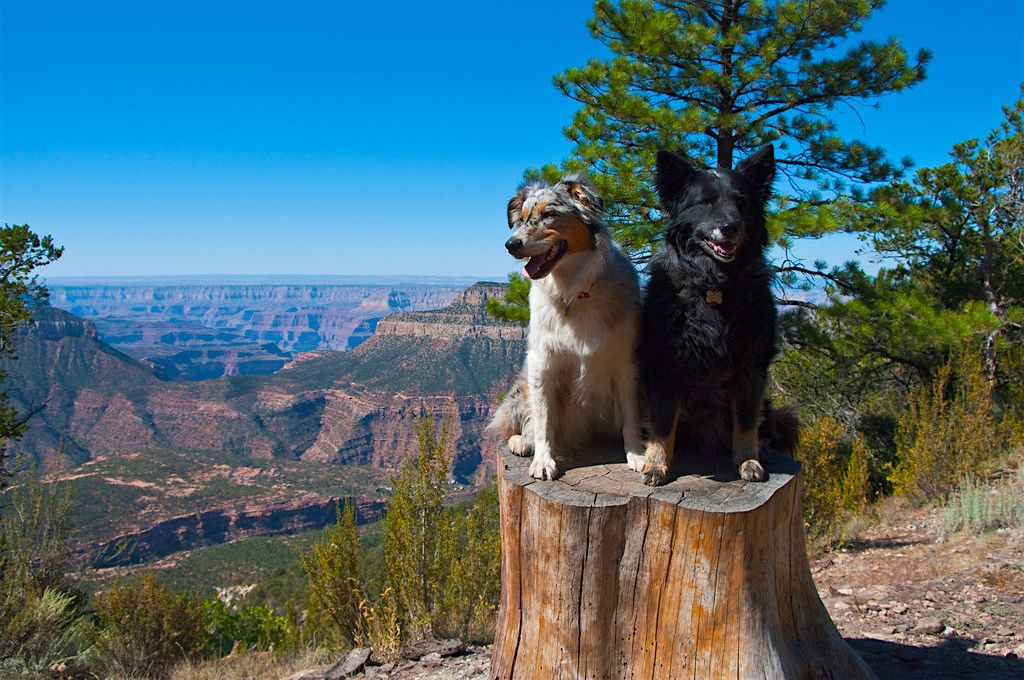 National Parks dogs