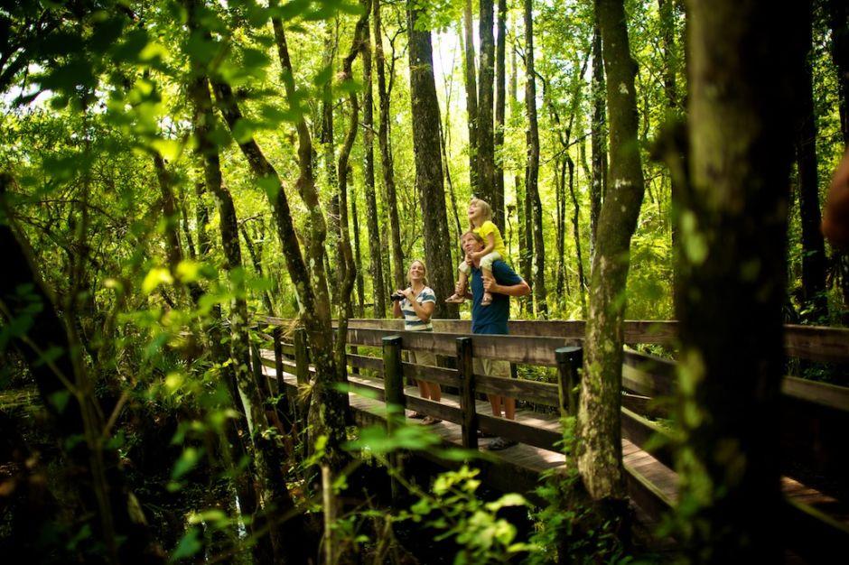 Six Mile Cypress Preserve Florida