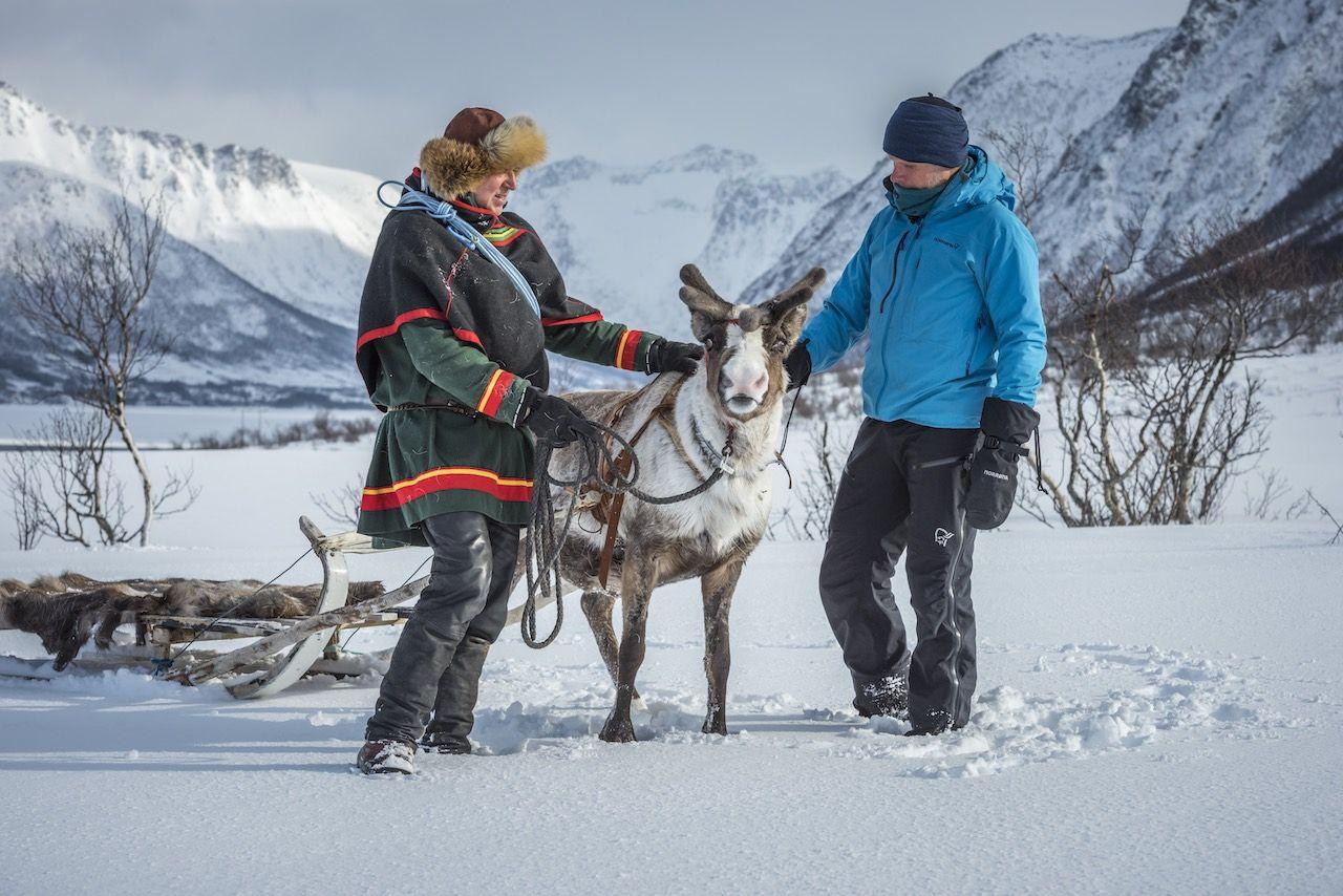 Sami Norway reindeer