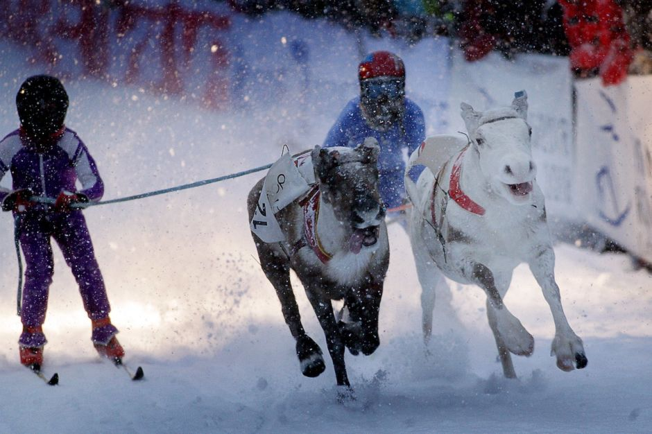 Reindeer Racing Arctic Europe