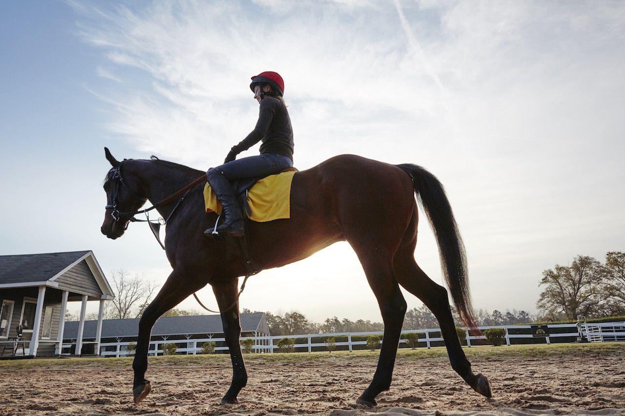 Aiken Track South Carolina horse