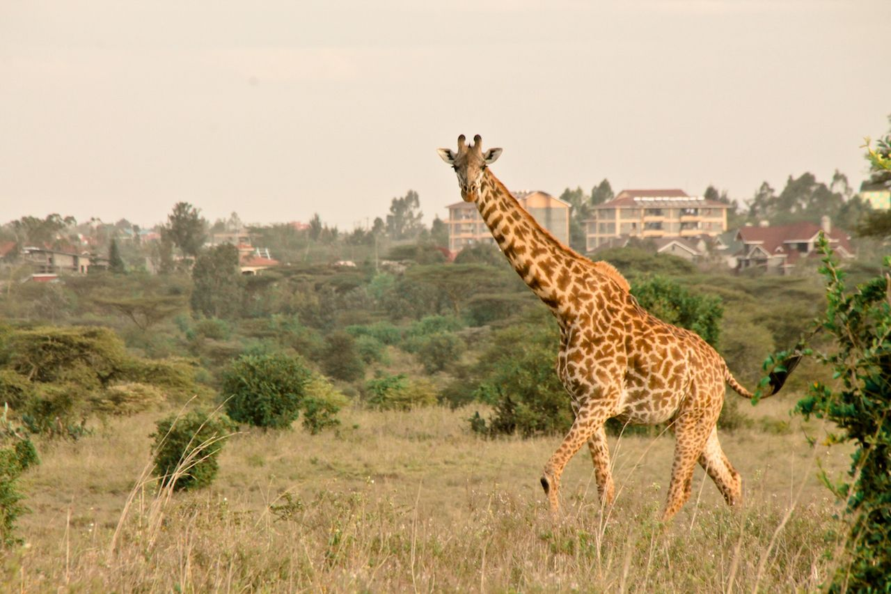 The places to take pictures of wildlife and architecture around Nairobi