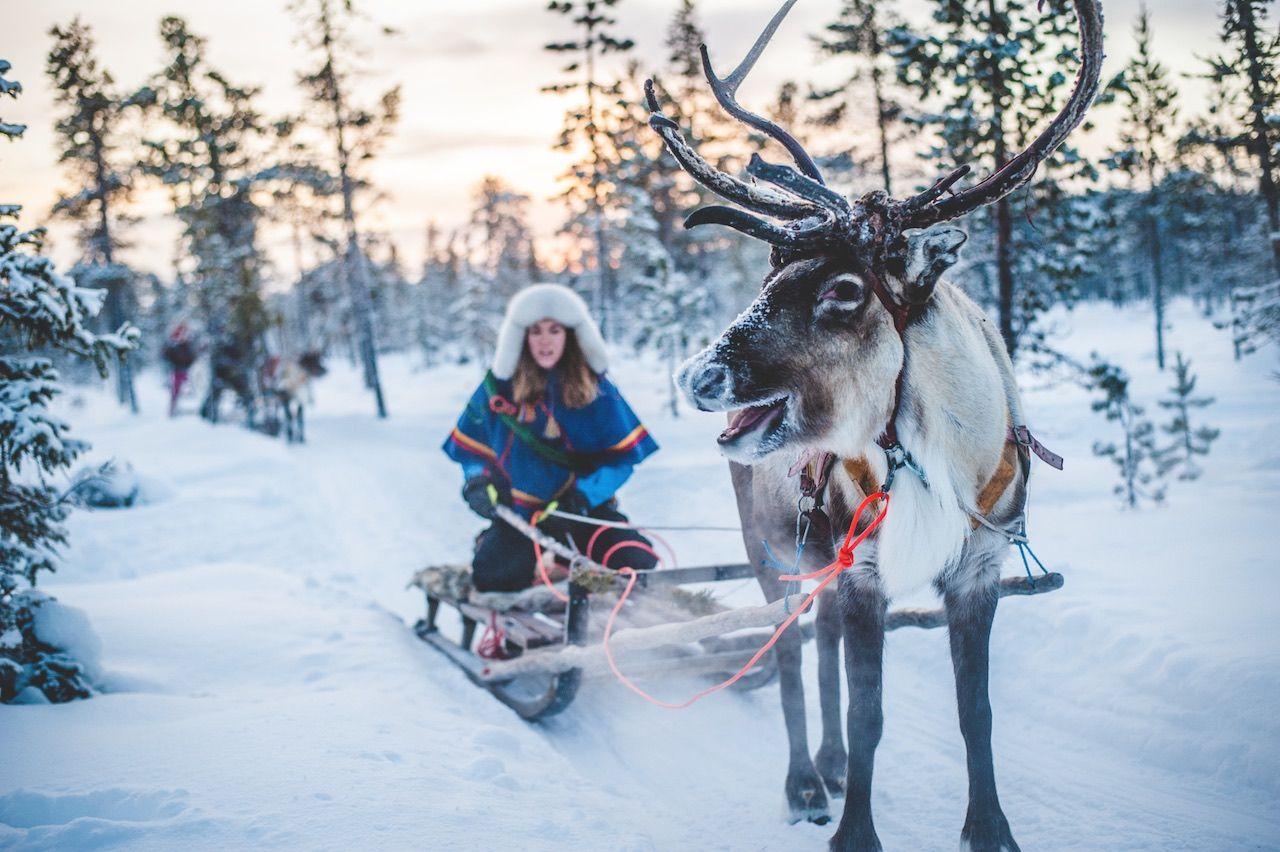 Reindeer Sami Arctic Europe