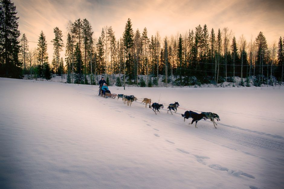 Dogsledding Sweden Lapland