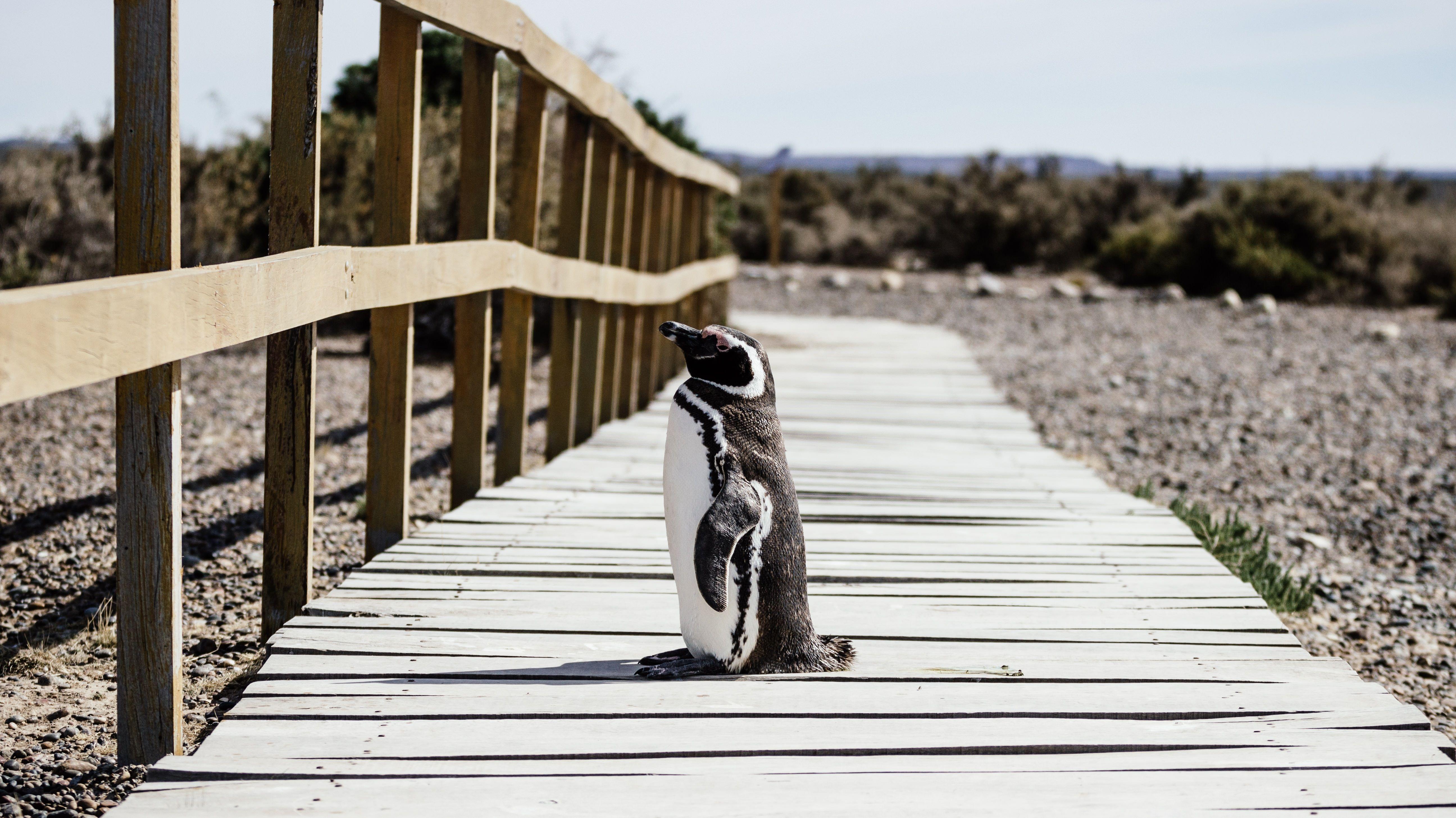 Península Valdés, Puerto Madryn, Argentina