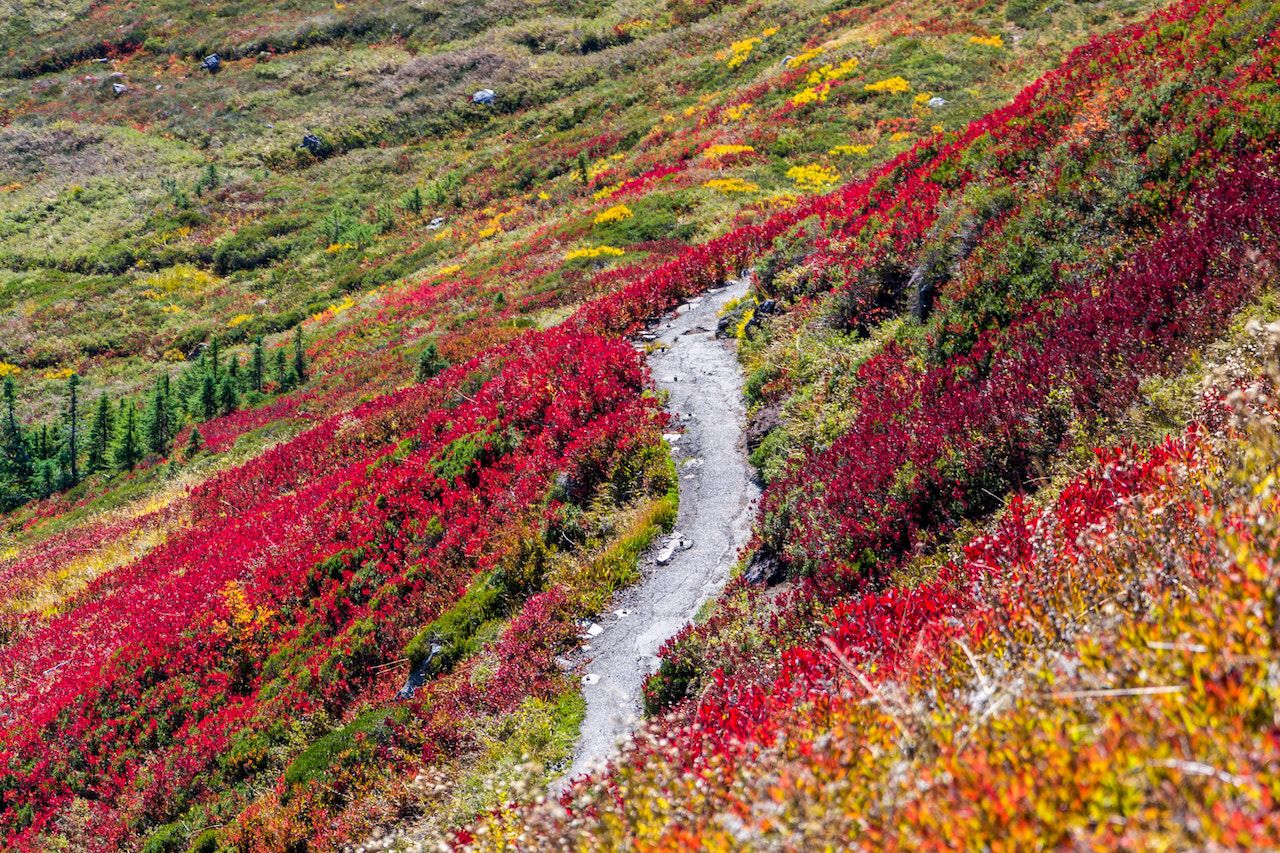 The best fall foliage photos: celebrating the arrival of autumn with images