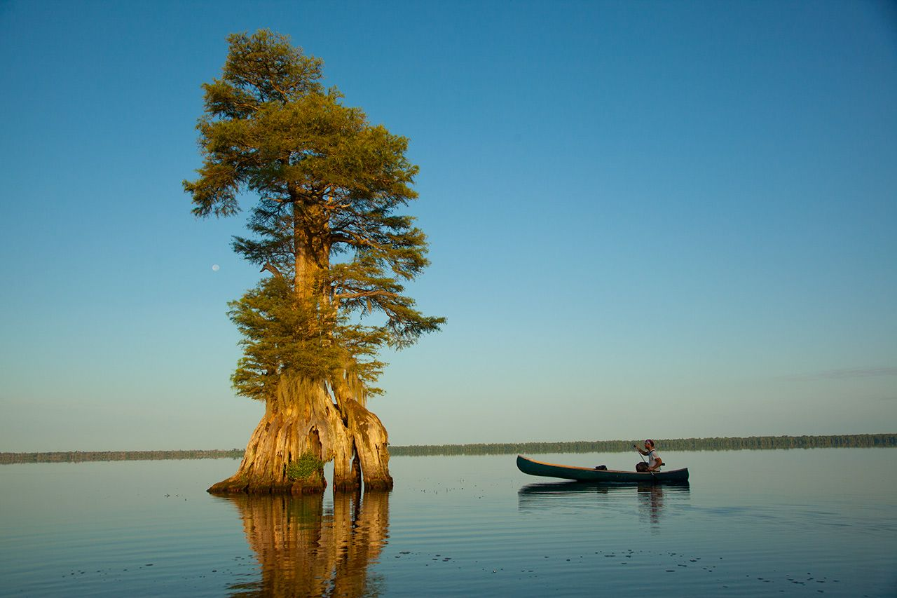 Great Dismal Swamp Virginia kayak