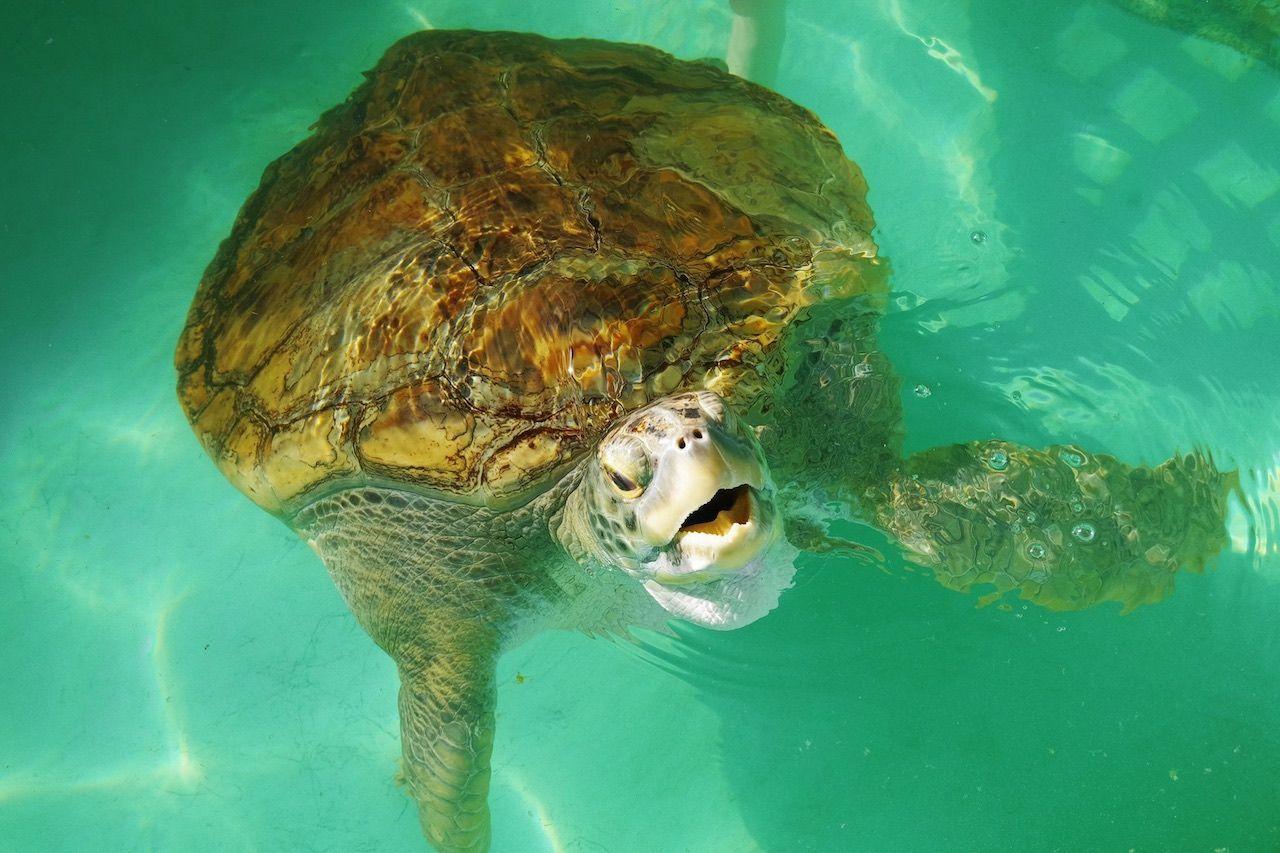 Sea Turtle Inc South Padre Texas