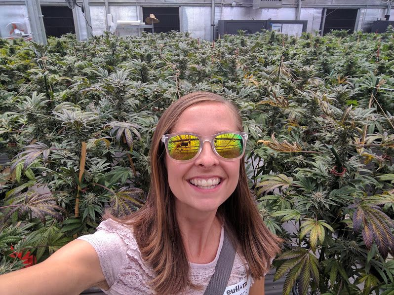 Image result for marijuana travelers to colorado images