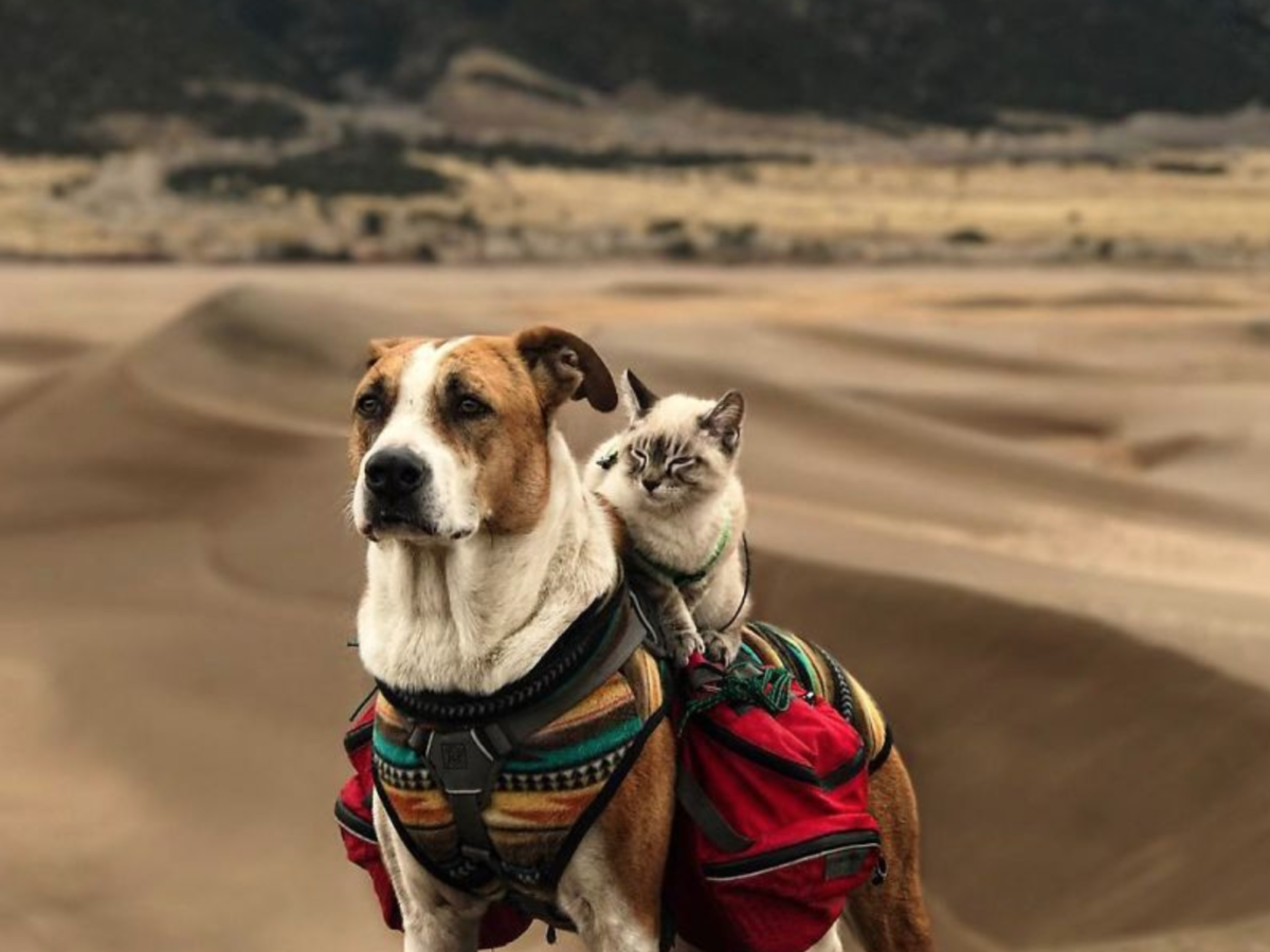 Photos: Meet the cat and dog besties hiking the Colorado wilderness together