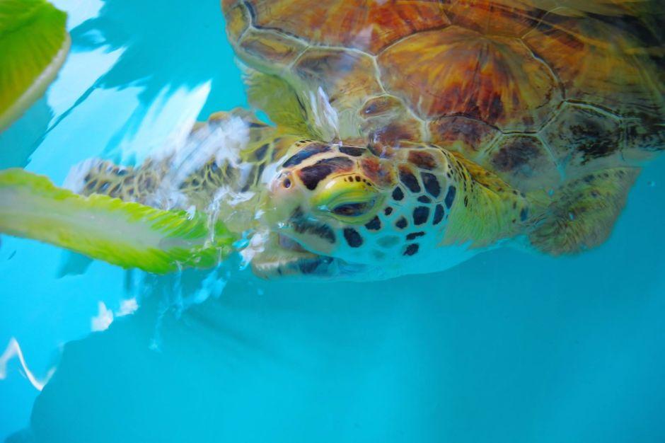 Sea Turtle Inc South Padre