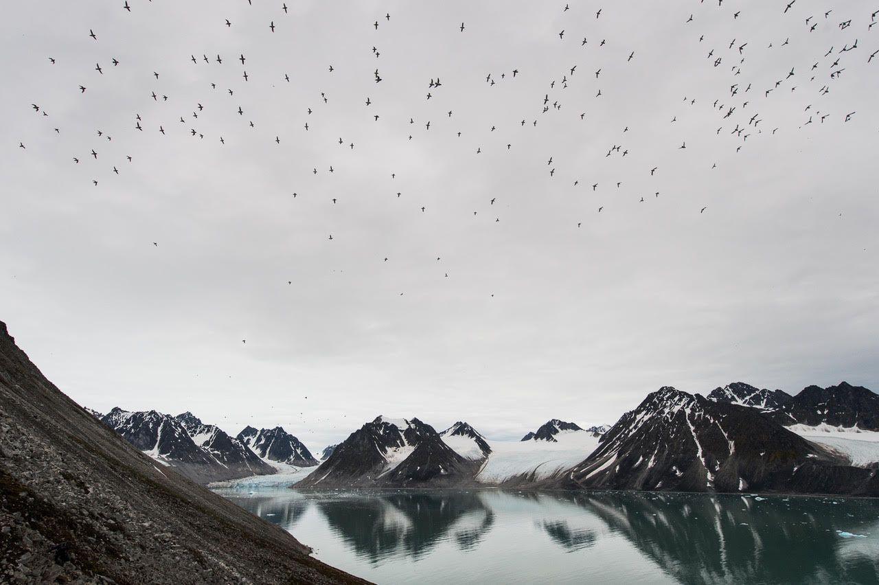 Svalbard birds