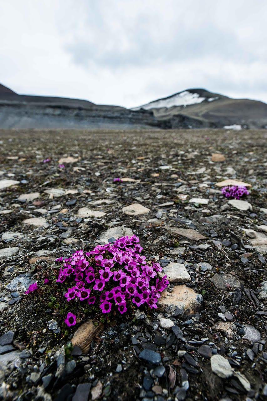 Svalbard vegetation