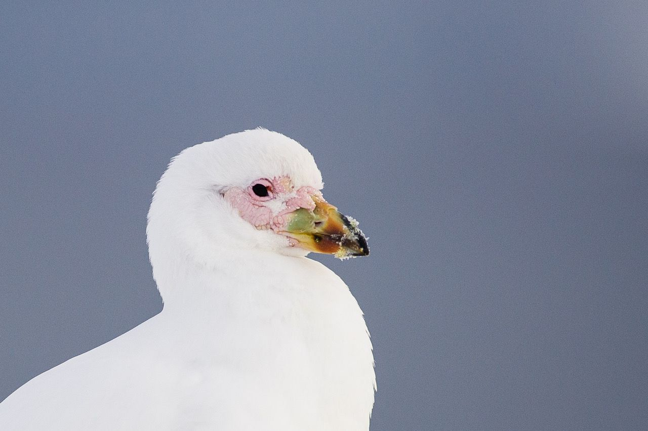 Antarctica's birds