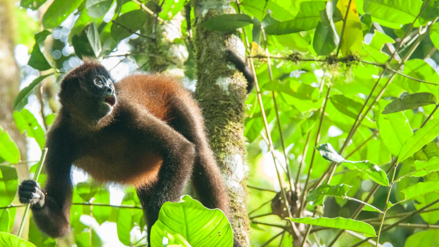 12 incredible species to see in Costa Rica and how you can help protect them