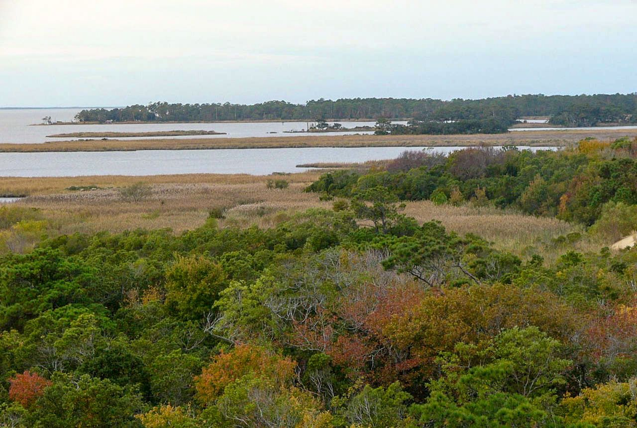Nags Head Woods Outer Banks