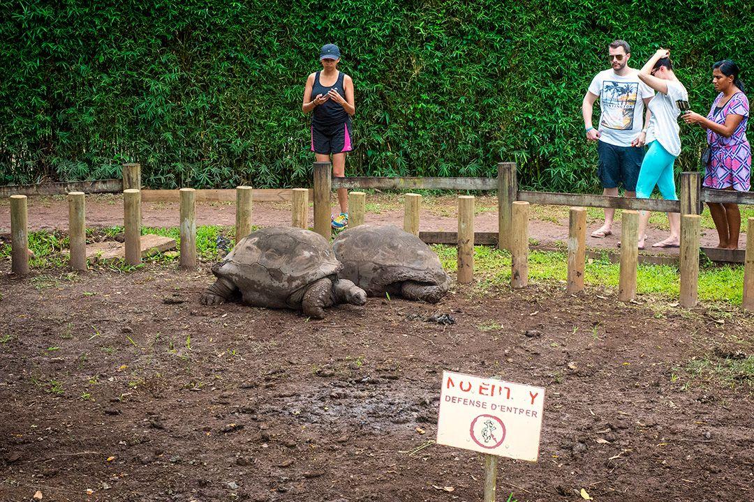 Tortoises in enclosure