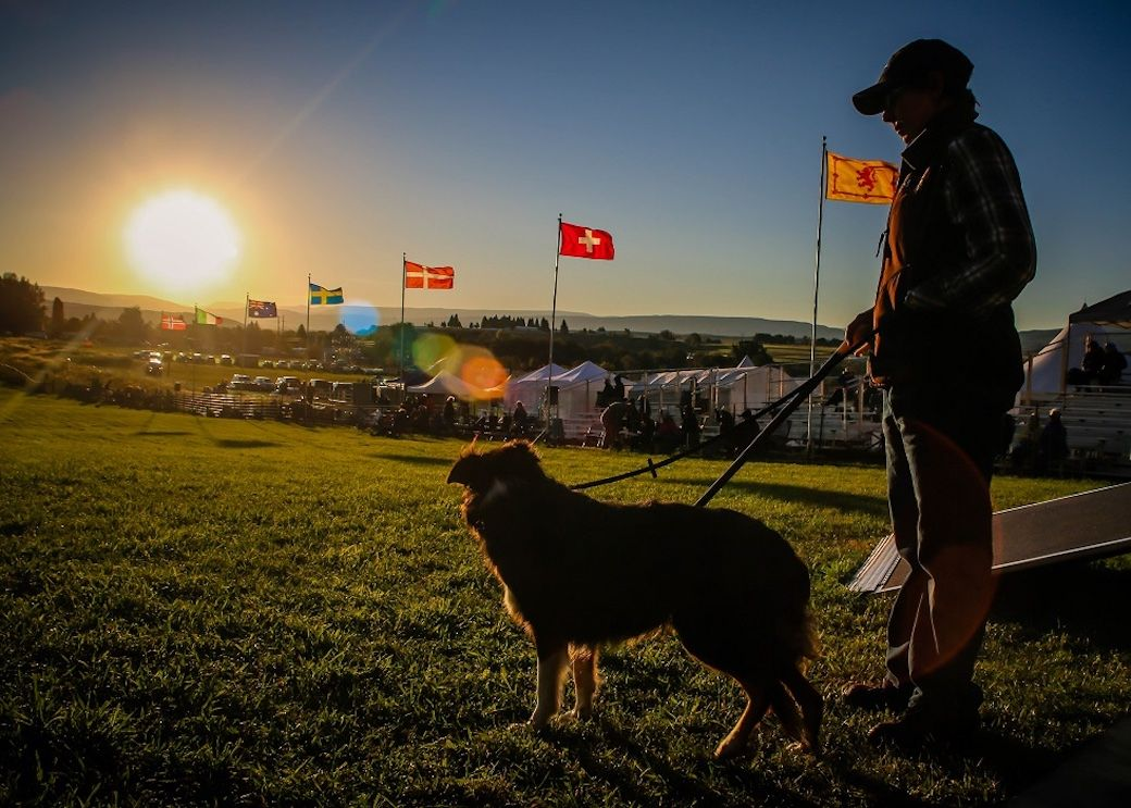 Meeker Sheepdog Trials Colorado