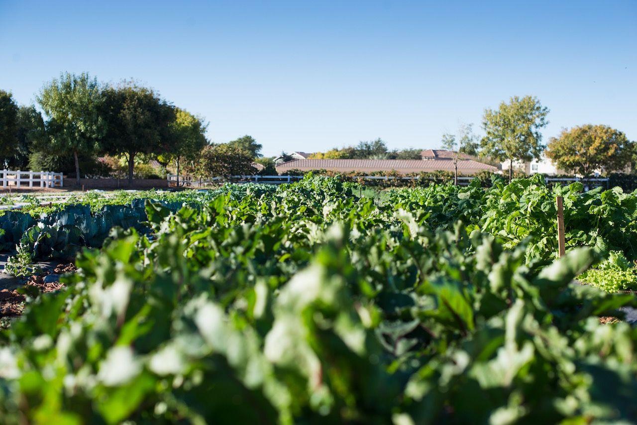 Agritopia farm Gilbert Arizona