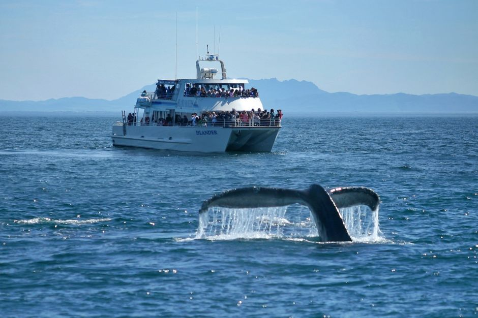 Channels Islands whale watching tours Ventura California