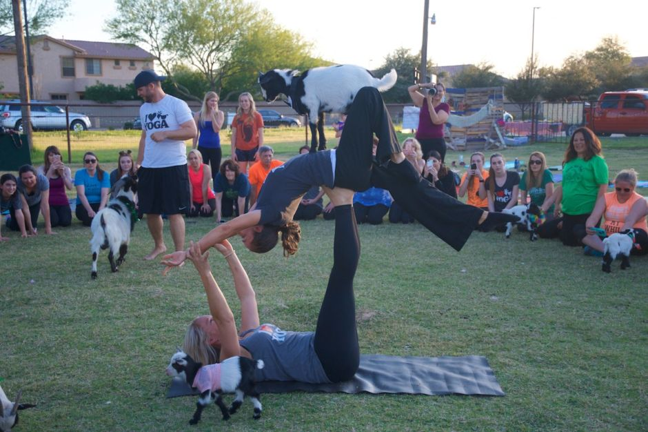 Arizona goat yoga Gilbert